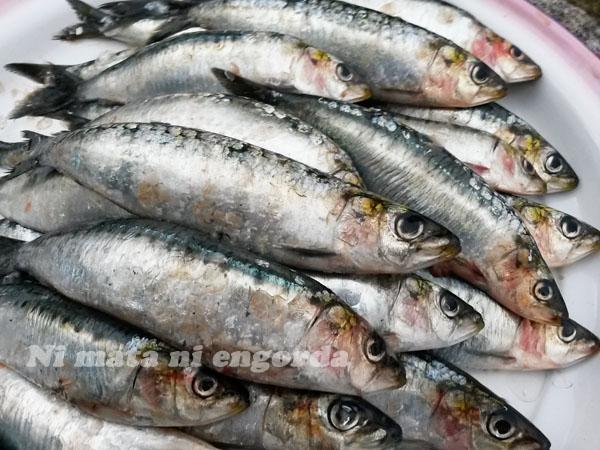 sardinas01