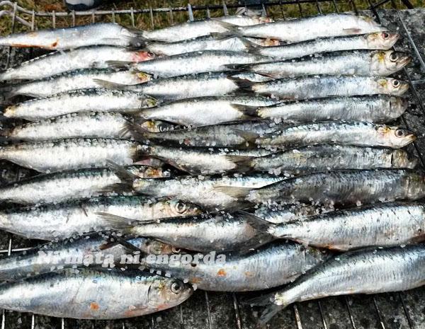 sardinas06